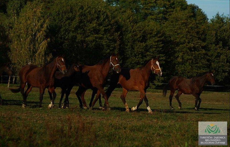 ERGELA AMB HORSES