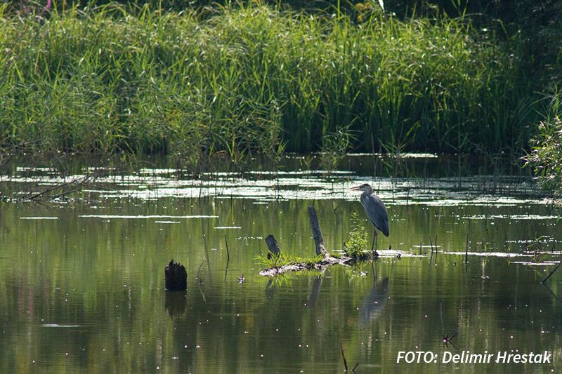 Foto safari i promatranje ptica